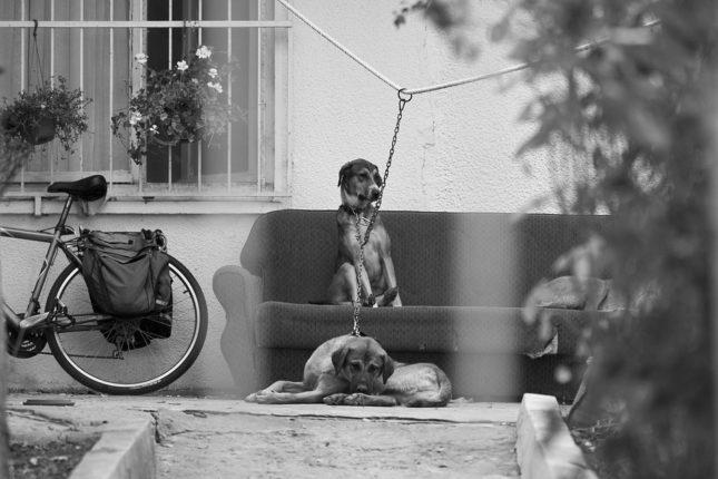 Pes v base obase